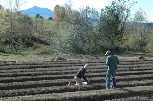 planting seed garlic at Green Mountain Garlic, Waterbury, VT