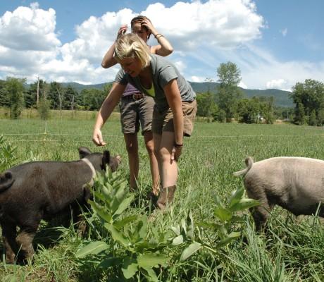 Farm hands at Green Mountain Garlic Harvest