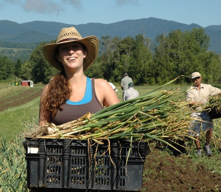 The Vermont Garlic Harvest