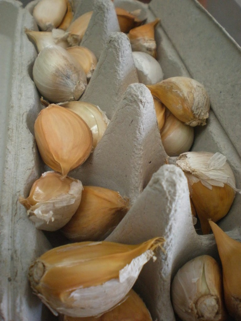 store garlic properly