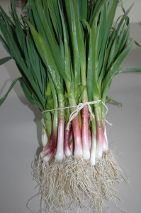 Organic Green Garlic