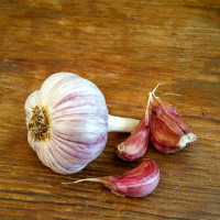 Turkish Red Garlic