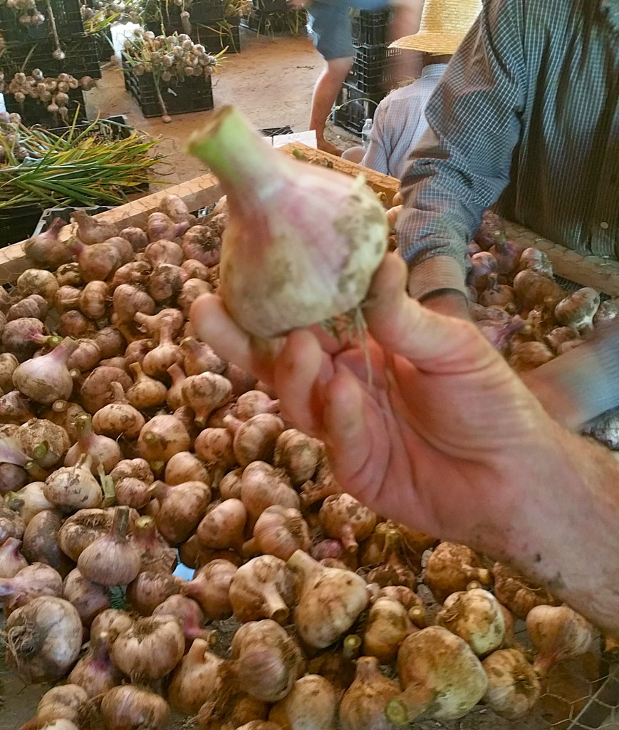 Handful_of_garlic
